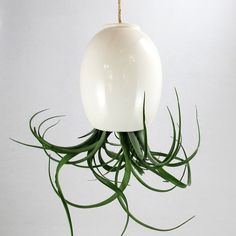 LARGE Hanging Air Plant Pod tm   Gorgeous Glossy White by mudpuppy
