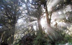 Student Photo -- Creation Care Studies Program, New Zealand