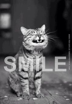 Funny Cat Pictures | Smiling cat