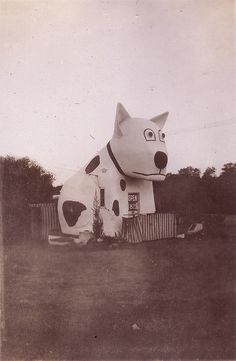 The Spotty Dog, Cape Town, South Africa Spotty Dog, Dog House Plans, Cape Town South Africa, Roadside Attractions, Most Beautiful Cities, African History, Baby Dogs, Dog Houses, Urban Furniture