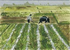 atc of rice paddy in Vietnam