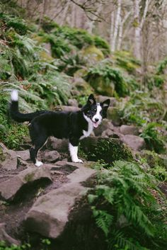 Moz on an Adventure | OR BORDER COLLIE, NEED A JOB & LOTS OF EXERCISE, GREAT DOG BREED ~