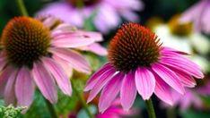 Konyhai hibák, melyeket gyakran elkövethetünk – BioBody Blog Daisy, Pure Products, This Or That Questions, Plants, Casual, Bra, Winter, Summer, Gadgets