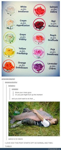 What if I just give every boy yellow roses