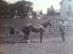"Large Vintage Photo Circa 1900 - Racehorse ""Little Dan"" Horse Racing 9""X7"" | eBay"