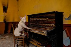 Meet Claire, the 3-year-old bull terrier travels the world with Dutch photographer Alice van Kempen, 48, and poses for photographs in abandoned buildings. Van Kempen seeks out abandoned places to photograph in pursuit of her passion for urban exploring, bringing along her globetrotting pooch as her trusted companion.2
