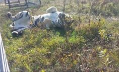 <p>These rescued tigers were once used as photo props. Now they have a splendid sanctuary home!</p>