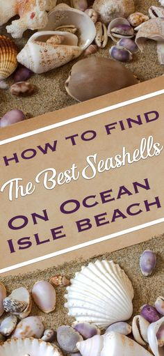Learn how to score the best seashells in Ocean Isle Beach, NC.and even get a little education on native species. Let's get to it, and go shelling! Ocean Isle North Carolina, Holden Beach North Carolina, Carolina Beach, South Carolina, Sunset Beach Nc, Ocean Isle Beach Nc, Myrtle Beach Vacation, Myrtle Beach Sc, Beach Trip