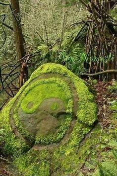 Yin Yang moss rock
