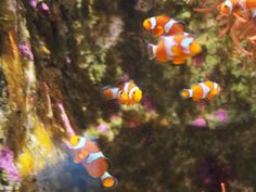 Némo aquarium La Rochelle