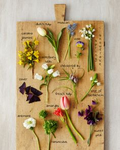 How to choose spring flowers in season for your wedding - Spring Floral Cutting Board Naked Bouquet Spring Flower Arrangements, Spring Flowers, Floral Arrangements, Flower Names, My Flower, Types Of Flowers, Beautiful Flowers, Seasonal Flowers, Planting Flowers