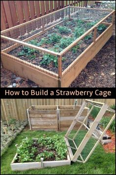 Diy raised garden – Keep your strawberries away from critters by building a strawberry cage! RaisedGarden OrganicGarden Gardens Diy raised garden – Keep your strawberries away from critters by building a strawberry cage! Backyard Vegetable Gardens, Vegetable Garden Design, Veg Garden, Fence Garden, Vegetables Garden, Diy Fence, Fruit Garden, Fence Ideas, Edible Garden