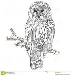 tekening-van-een-uil-op-een-tak-49259311.jpg (1300×1390)