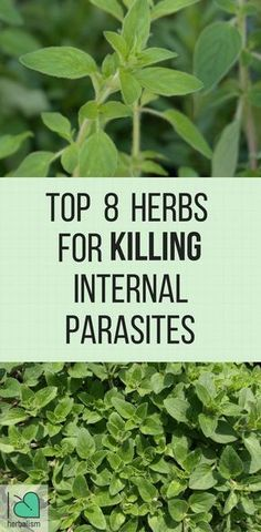 Baseding on data, 1/3 of Americans have parasites that live in their digestion system. Possibly this is shocking but, parasites are a lot more common than you thought. There are many different kinds of parasites, and a lot of them are common. You might ha