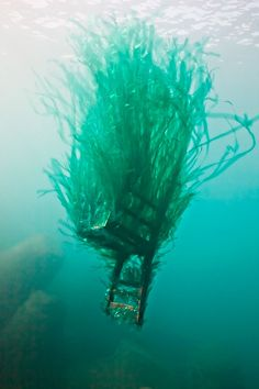 Amazing Underwater Sculptures Made Of Our Marine Trash. Artists Mathieu Goussin and Hortense Le Calvez
