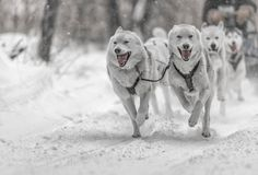 Kearney Dog Sled Races #2 by yld882008 ...