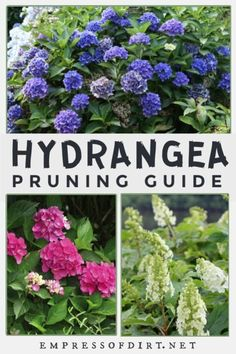 Contrary to popular advice, not all hydrangeas benefit from pruning and many will not flower if you do. Find out which species benefit from cutting back and those that should be left alone to ensure a good flowering season. When To Prune Hydrangeas, Types Of Hydrangeas, Pruning Hydrangeas, Hydrangea Landscaping, Succulent Landscaping, Landscaping Ideas, Backyard Landscaping, Pruning Plants, Tree Pruning