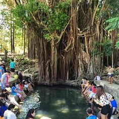 A 400-plus year-old balete tree in Siquijor .  #travel #philippines #siquijor #baletetree #discover #explore #Adventure #travelph #wander #wanderlust #nature #naturelover #weird #enchanted #destinations