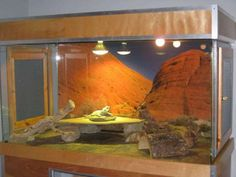 31 The tank decoration of an attractive bearded dragon habitat - meowlogy