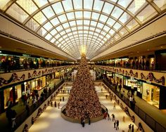 Tree in mall