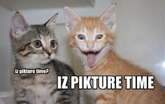 Cute Cats And Cat Gifts: Funny Cats With Captions #Funny #Cats
