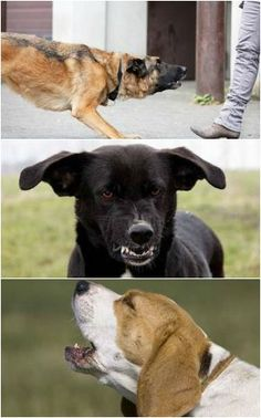 Dogs can't speak our verbal language, but they give us tons of information using body language. Can you read your pup?