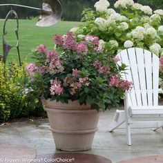 Little Quick Fire is a hydrangea that will work well in a container or small landscape setting. To see a list of other shrubs that work in containers visit http://emfl.us/_dId    #ProvenWinners