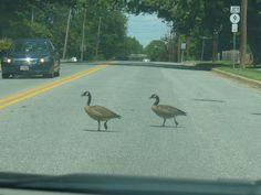 Delaware City, Spring Delaware City, Spring, Animals, Animales, Animaux, Animal, Animais
