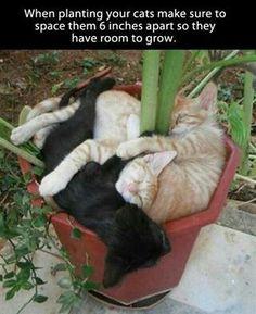 Gardening tip .......