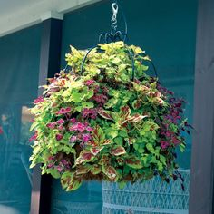 Create creative hanging flower arrangements with Pamela Crawford hanging baskets. These hanging flower baskets add beauty to any garden. Garden Basket, Basket Planters, Hanging Planters, Garden Planters, Hanging Gardens, Outdoor Planters, Diy Hanging, Fall Plants, Shade Plants