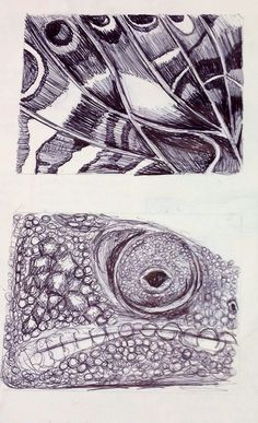 Biro studies of butterfly wing through viewfinder.