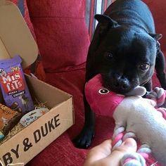 One of our many happy Ruby & Duke #Dukebox dog toy and treat customers. www.rubyandduke.com  #dogsofinstagram #dogstagram #dogs #dogsrule #doglove #doglovers #doglife #dogoftheday #doggy #doglover #doggie #dogscorner #dogofinstagram #dogsofinsta #dogwalk #dog_features #doggies #dogsandpals #dogloversofinstagram #dogdays #dogsofinstaworld #dogcrushdaily #dogslover Mis Fit, Dog Walking, Dog Toys, Dog Life, Duke, Doggies, Dog Lovers, Pitbulls, Happy
