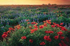 Wildseed Farms: Fields of Dreams - Texas Highways