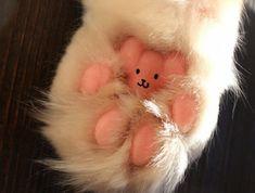 Lovely teddy bear in cat paw