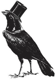 Crow, blackbird with top hat
