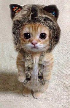 Fuzzy wuzzy kitty