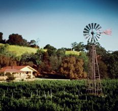 Lincourt Vineyard - my favorite stop on our Santa Ynez Valley wine tour.