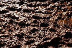 White fungus on soil