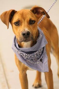 ADOPTED>NAME: Seth  ANIMAL ID: 31862762  BREED: Retriever mix  SEX: male  EST. AGE: 1 yr  Est Weight: 30 lbs  Health: Heartworm neg  Temperament: dog friendly, people friendly  ADDITIONAL INFO: RESCUE PULL FEE: $35  Intake date: 6/10  Available: 6/16