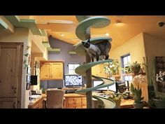 "Peter the home builder turned his house into an indoor cat paradise for his 15 rescue cats. ""To keep his 15 rescue cats occupied, home builder Peter Cohen has constructed elaborate catwalks, tunnels, platforms and perches throughout his California home. Crazy Cat Lady, Crazy Cats, Video Chat, Cat Video, Transformers, Cat Playground, Indoor Playground, Cat Room, California Homes"