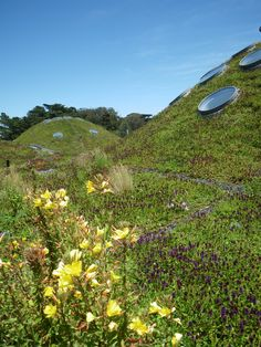 California Academy of Sciences, by Renzo Piano, San Francisco