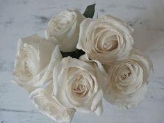 beachcomber white flowers