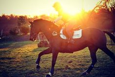 I am so in love with this photo!    seal bay xcountry cantering sunset silhouette