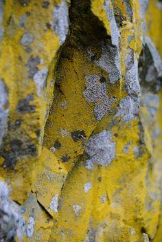 rock lichen, photo by dkdoug on flickr