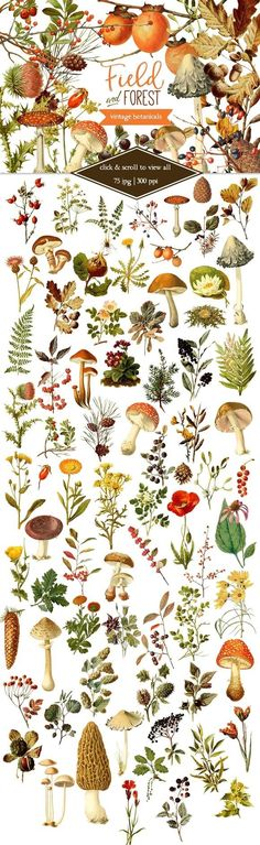 Illustration Art Vintage - Field & Forest Vintage Botanicals by Eclectic Anthology on Creative Market Botanical Drawings, Botanical Art, Botanical Tattoo, Vegetal Concept, Painting & Drawing, Life Drawing, Posters Vintage, Nature Tattoos, Nature Tattoo Sleeve
