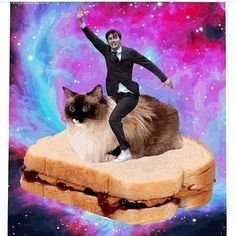 David on a cat on a pb&j. In space. Yes. David Tennant in Places he shouldn't be.