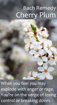 Bach Remedy - Cherry Plum