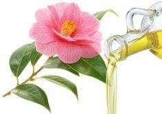 Λάδι Καμέλιας (Camellia Seed Oil) Alternative, Plants, Diy, Bricolage, Do It Yourself, Plant, Homemade, Diys, Planets