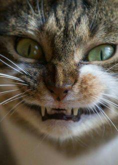 "=^..^= ""I Am Smiling!"""