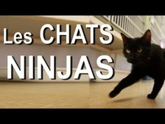 Les chats ninjas (the ninja cats) French Teacher, Teaching French, How To Speak French, Learn French, Funny Cat Videos, Funny Cats, Funny Animals, Crazy Cat Lady, Crazy Cats